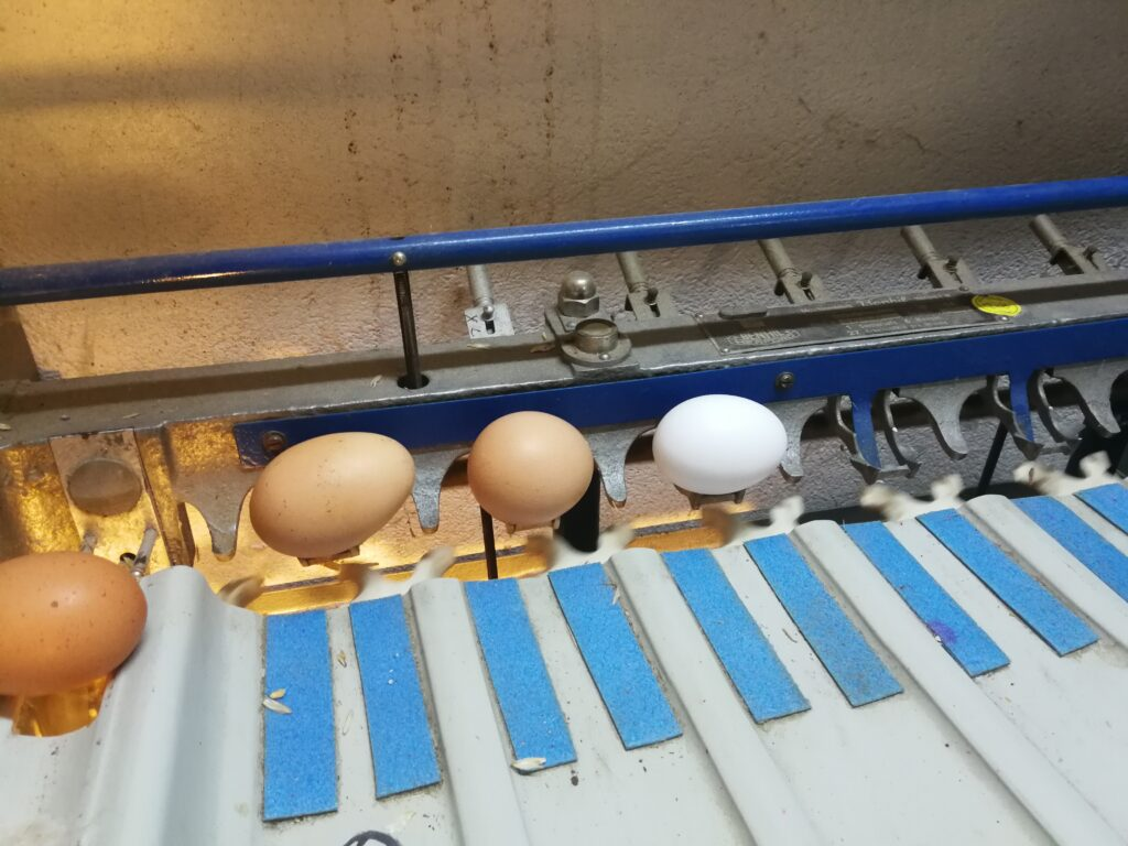 Claras FOEJ auf dem Rathsbacher Hof Eier Sortiermaschine